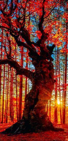 Autumn forest near the Belintash Rock landmark in the Rhodope Mountains of Bulgaria | Backyards Click