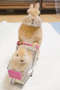 買い物をしているような雰囲気を醸し出しているうさぎの親子が可愛いとTwitterで話題になっている。赤ちゃんうさぎの乗ったショッピングカートを押しているのはパパ