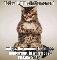 Today I will live in the moment. Unless the moment becomes unpleasant in which case, I will take a nap.   xx