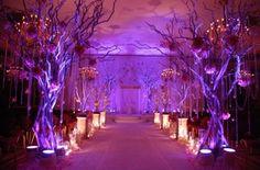 Walkway of Manzanita Trees with Up lighting