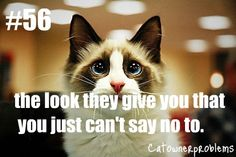 cat owner problems #56