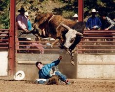 Skoal Pacific Bell, Livestock • Bucking Bull • Inducted 2007, PRCA Rodeo