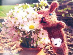 Kaenguruflower #kaenguru #flowers #sunshine #doppellotte #dresden