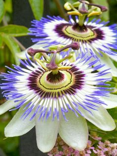 WoW!! This is what I call a flower!