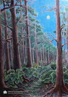 Rysunek lasu sosnowego. Postanowiłem uwiecznić na tym rysunku skraj lasu iglastego, jakich jest wiele w naszym kraju. Spokojna leśna sceneria, piękne sosny, korzenie. Ołówek, kredka, kartka A4. Może kilka rzeczy bym poprawił, muszę znaleźć lepszy sposób na to, jak narysować niebo. Rysowanie lasu, choć niełatwe, sprawia mi dużo przyjemności i myślę, że mam je w miarę opanowane. Pozostaje ćwiczenie rysowania dalekich drzew i detali. Jakub Łechtański.