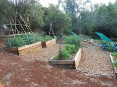 Raised beds on a hill.. For along the driveway and maybe fenced eventually? I think yes