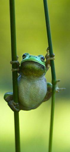 カワイイなあ。別に普段からカエルが好きなわけじゃないんですけどね。目とかお腹とかすごくいい。: