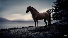 Horses Desktop Wallpaper
