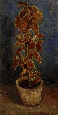 Coleus Plant in a Flowerpot  Oil on canvas  42.0 x 22.0 cm.  Paris: Summer, 1886