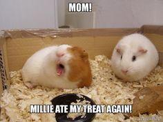 Mom!  Millie ate my treat again! -