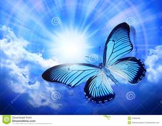 Butterfly Blue Sky Sun Nature - Download From Over 63 Million High Quality Stock Photos, Images, Vectors. Sign up for FREE today. Image: 24906248