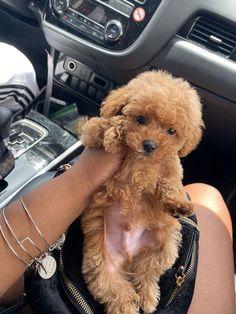 Super Cute Puppies, Baby Animals Super Cute, Cute Baby Dogs, Cute Little Puppies, Cute Dogs And Puppies, Cute Little Animals, Cute Funny Animals, Cute Babies, Doggies