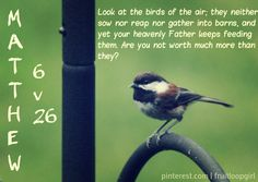 Matthew 6:26 * Look at the birds of the air, that they do not sow, nor reap nor gather into barns, and yet your heavenly Father feeds them. Are you not worth much more than they?