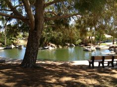 Freestone Park in Gilbert, AZ