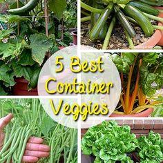 Best Container Gardening Vegetables | Best Container Vegetables for Beginning Gardeners