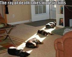 Death ray strikes again