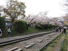 南禅寺すぐ横の琵琶湖インクライン。 銀閣寺から続く哲学の道の桜並木も南禅寺で終わります。http://kyotonote.com/nannzennji/