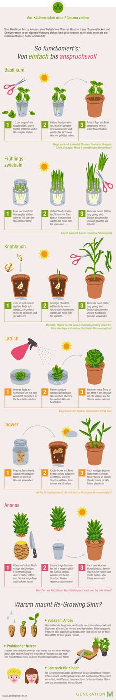 The infographic shows you how to make new vegetables from kitchen leftovers - Gartenideen & Tipps - Garten Design Green Garden, Herb Garden, Indoor Garden, Garden Plants, Indoor Plants, Garden Hedges, Vegetable Garden, Outdoor Gardens, Organic Gardening