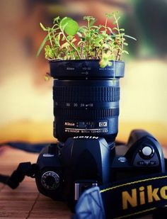 ~Garden Camera