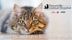 Where The Smart Pets Bring Their People. | Tuscawilla Animal Hospital has veterinarians that care about cats and dogs too! Call us today to schedule an appointment. #veterinarymedicine #animalhospital