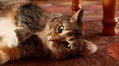 Homemade Cat Urine Neutralizer