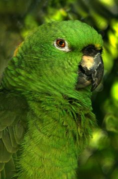 How very green is my parrot!
