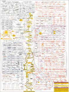 metabolism pathway