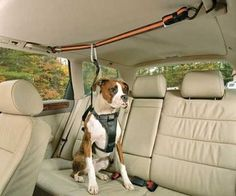 If your dog loves to ride in the car then you need this pet safety harness for them! It features a zip line to install in the car and a harness to go on your dog. By attaching them to the line your dog will be safe from hard braking and unable to jump into the front seat during driving. When you open the car door they won't be able to jump out until you unclip them. Can also be used on boats as seen in the picture.