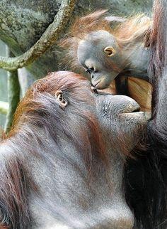 Giving mom a kiss