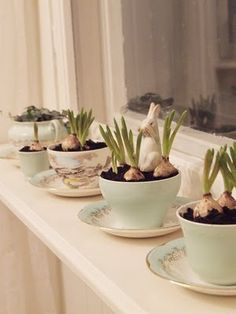 love forcing bulbs indoors....like this display