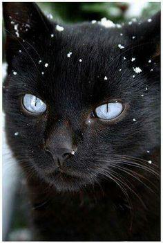 Kočička v zimě