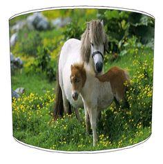 Shetland Ponies, She