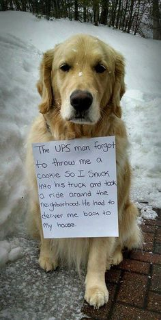 UPS dog - Just couldn't resist posting this in the pilot's group. Considering I flew for good ole UPS. ...