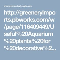 http://greeneryimports.pbworks.com/w/page/116409449/Useful%20Aquarium%20plants%20for%20decorative%20finish%20and%20attractiveness