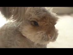 Internet Sensation Wally The Rabbit