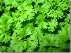 PARSLEY:  1. Parsley is rich in Vitamin B12, Vitamin C[1], Vitamin K, Vitamin A as well as Beta Carotene. Apart from the above listed vitamins this herb is also a good source of folic acid as well as iron.    2. Parsley is a power plant of chlorophyll, this helps curb the growth of bad bacteria as it has anti bacterial properties. Chlorophyll found in parsley is a good cure to stop and avoid bad breath (halitosis) for long time.    3. Parsley herb has some volatile oils such as myristicin, li...