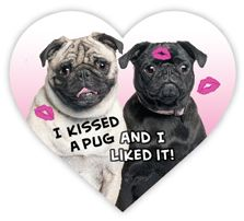 I kissed a pug and I liked it magnet