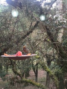 Foto de Estalagem Monte Verde, Monte Verde: Vista geral dos chalés - Confira as 5.115 fotos e vídeos reais dos membros do TripAdvisor de Estalagem Monte Verde