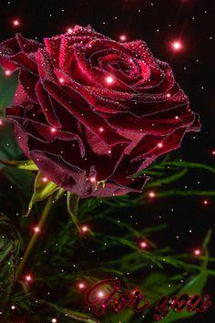 Imagen De Amor De Corazones Y Rosas Con Brillo Y Movimiento Linda
