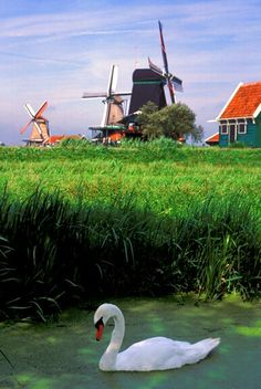 Holland what a beautiful place. Tilting At Windmills, Luxembourg, Le Moulin, Wonderful Places, Beautiful Places, Amazing Places, Beautiful Landscapes, Beautiful World, Globes