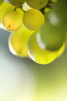 Photo about Beautiful green grapes macro closeup. Image of nobody, close, muscat - 10594952 Green Grapes, Logo Design, Graphic Design, Muscat, Raisin, Plant Hanger, Pixel Art, Harvest, Photo Ideas