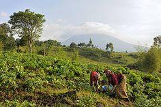 Hacia un modelo de alimentación global más sostenible para la gente y para el planeta