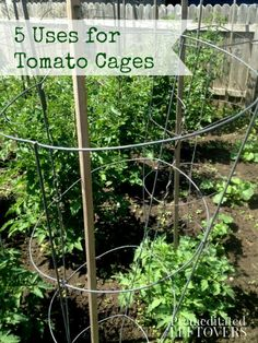 5 Uses for for Tomato Cages - Tomatoe Cages are good for more than just growing tomatoes! Here is a list of vegetables you can grow using tomato cages.