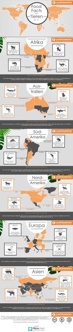 Food Facts von Tieren: Wusstest du, dass Kängurus monatelang ohne Wasser auskommen können?! #Tiere #weltweit #facts Food Facts, Infographic, Social Media, Info Graphics, Water, Animals, Infographics, Social Networks, Information Design