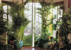 Indoor plants and front areas can be amazing in the home.