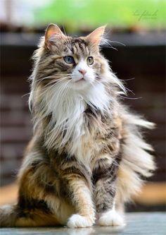 cat ♥ Mais