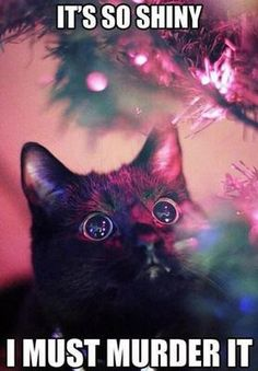 funny cat meme with a picture of a black cat looking up at the christmas lights on a tree with the caption it's so shiny I must murder it