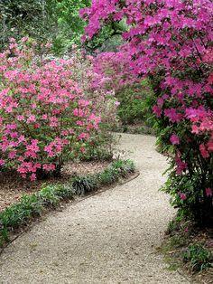 Rosedown Plantation by jrayarkie, via Flickr