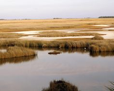 Google Image Result for http://images.fineartamerica.com/images-medium-large/saltwater-marsh-marty-koch.jpg