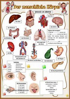The human body learn German 2019 - DE . German Grammar, German Words, Learn Russian, Learn German, Deutsch A2, German Resources, Deutsch Language, Study German, Germany Language